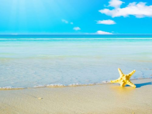 10-star-fish-sea-beach-sand-wallpaper-preview